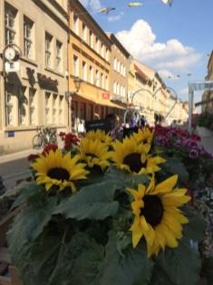 Wittenberg - schönes Deutschland