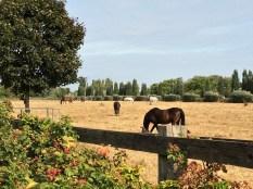Pferdekoppel - davon gibt es unzählige am Mauerweg