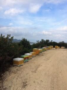 Wanderung - Bienenkisten