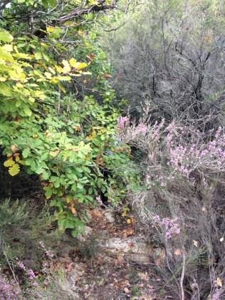 Wanderung - im Gebüsch