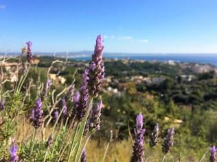 Lavendel im Dezember