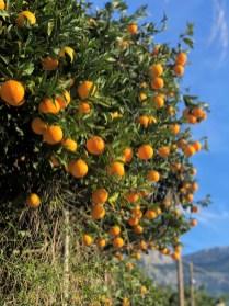 Im Orangental