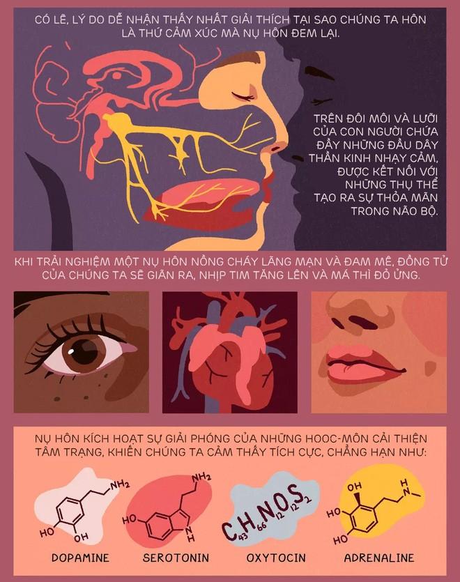 [Infographic] Nụ hôn bắt nguồn từ đâu? Tᾳi sao chύng ta hôn nhau và khoa học phίa sau mọi nụ hôn - Ảnh 4.
