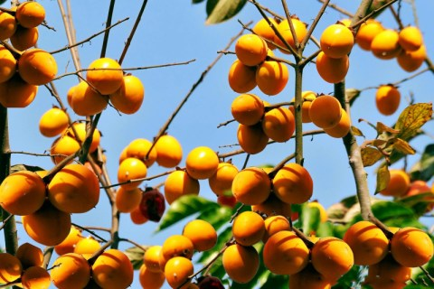 Hồng Bảo Lâm - Lạng Sơn
