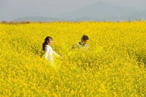Dân mạng sửng sốt trước cánh đồng hoa cải vàng đẹp như tranh vẽ có thật tại  Đà Lạt, xem ảnh mà ngỡ đâu nước Nhật xa xôi