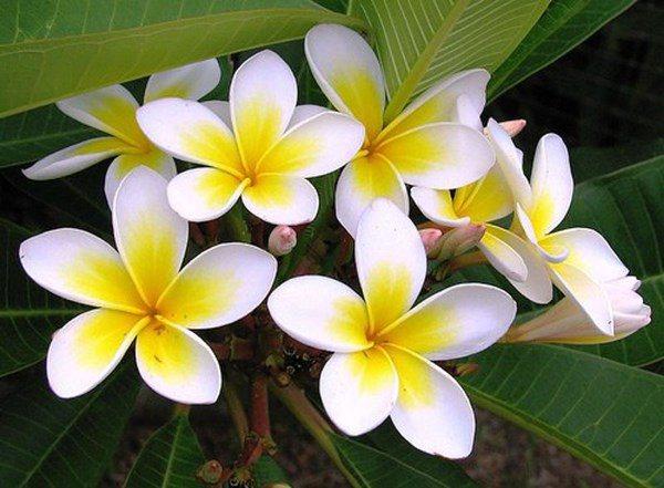 Những loᾳi hoa không nên dâng cύng trên bàn thờ vào thάng 7 âm lịch - 4
