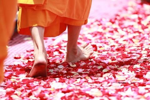 Tu Sĩ, Đi Dạo, Cánh Hoa Hồng, Đạo Phật, Nước Thái Lan