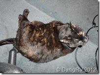 My Dang Cat