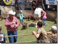hog chasing