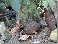 Texas turtle