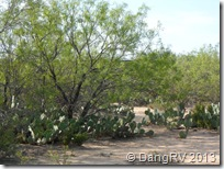 Texas trees and cactus landscape