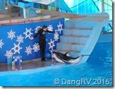 Seaworld Dolphin Show