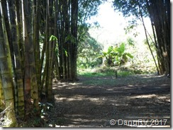 Bamboo grove in the rainforest Maui, HI