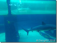 Tubing through the shark pool!