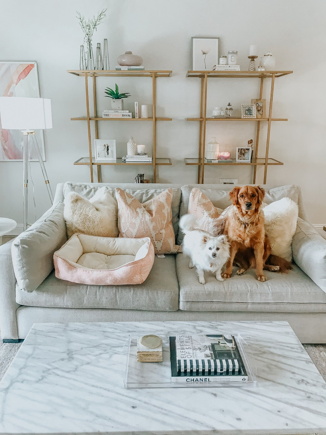 how to do life with dogs that shed