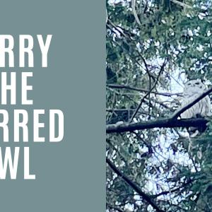Barry_The_Owl