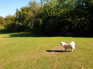 Kara playing at Benhall park