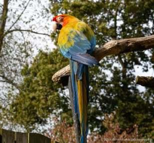 Parrot Birdland October 2019