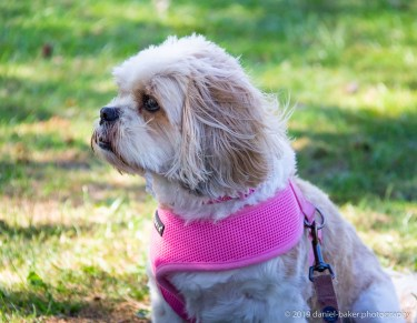 Mya a Cava-Tzu at Hesters way park