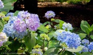 flowers at Westonbirt Arboretum
