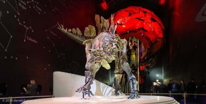 Stegosaurus at the Natural History Museum London