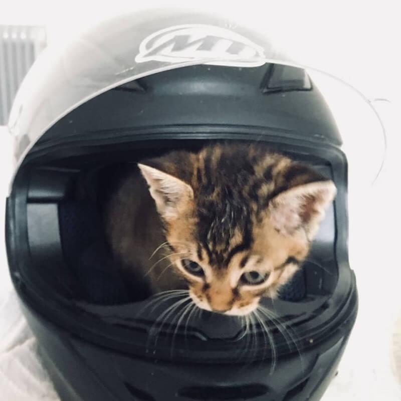 pisici spre adoptie 2