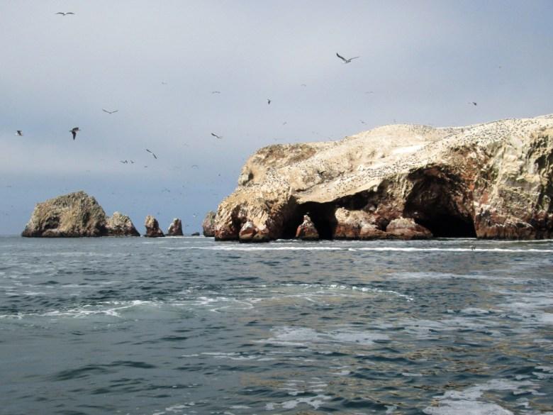 pinguins - islas ballestas - peru - dicas de viagem