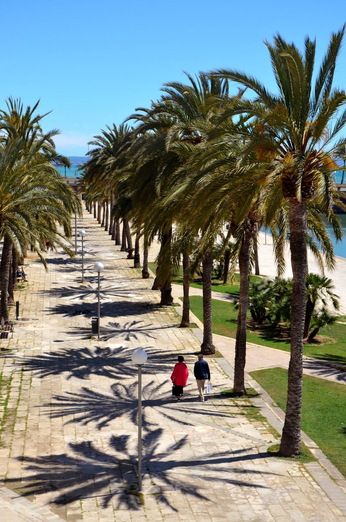 palmeiras - parque del mar - palma de maiorca - turismo