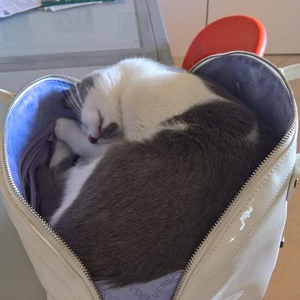 foto di cani e gatti di una pet sitter
