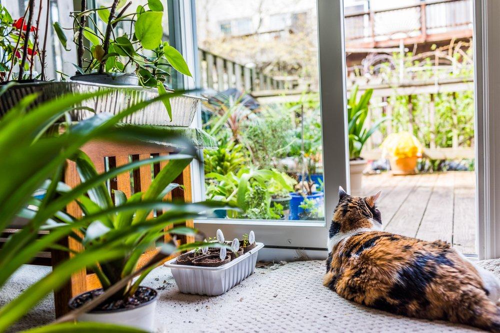 L'Aloe Vera va bene anche per gli animali? Certo!