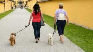 agriturismo che accetta animali in Umbria