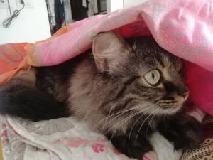 cose che ci insegnano i gatti per vivere meglio