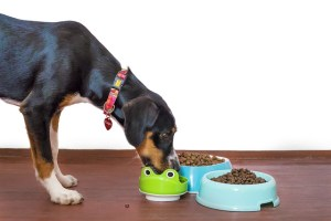 come leggere l'etichetta del cibo del cane
