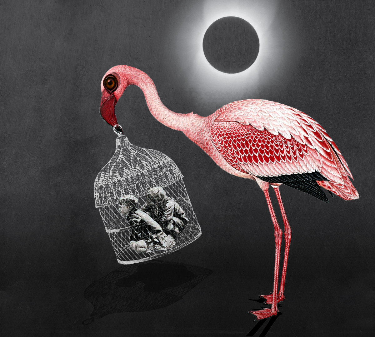 images_flamingo_original