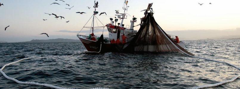 Senado aprueba penas para quien comercialice con especies acuáticas en peligro de extinción*