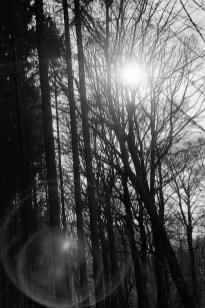 Schwarz Weiß Bild Analog, Minolta XD7 und TRI-X 400