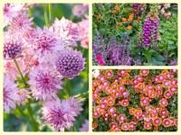 Pin Best Perennial Flowers For Spring Gardens on Pinterest
