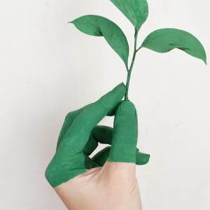 Mão segurando uma folha