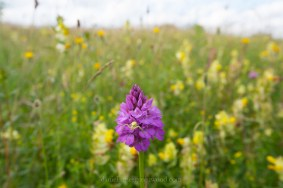 North Downs diary June 2016-8332