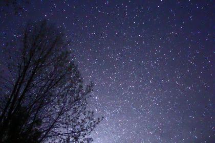 1280px-night_sky_stars_trees_02