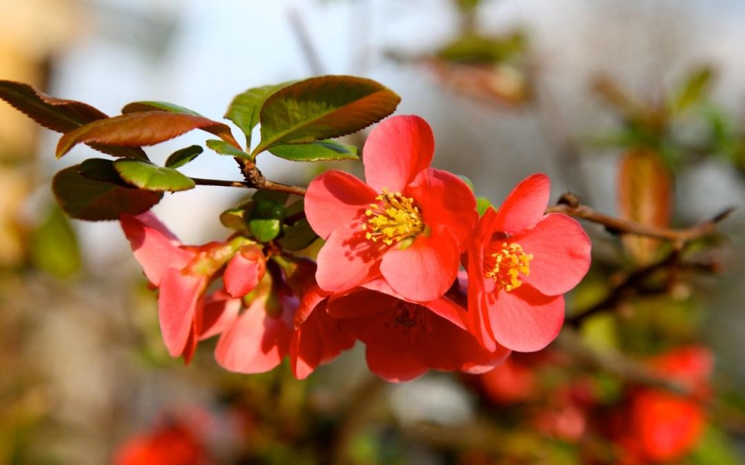 Duft-Reisende – Mandelblüten