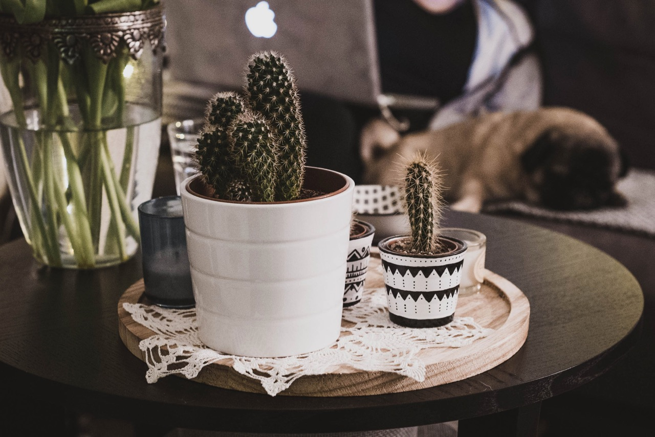 Pflanzen als Dekoartikel