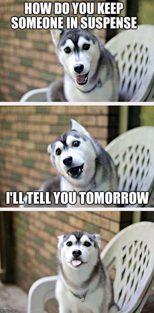 suspense husky.jpg