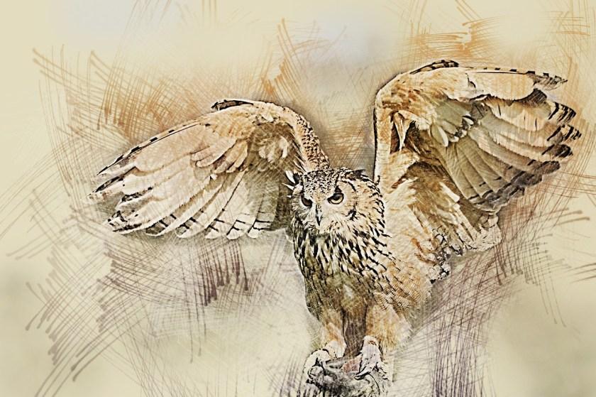 owl, wildlife, bird