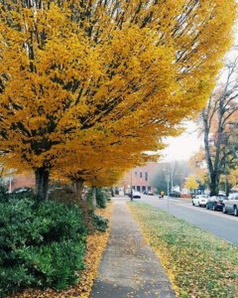 fall-tree-oregon-leaves