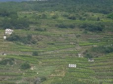 Vineyards in northern Italy
