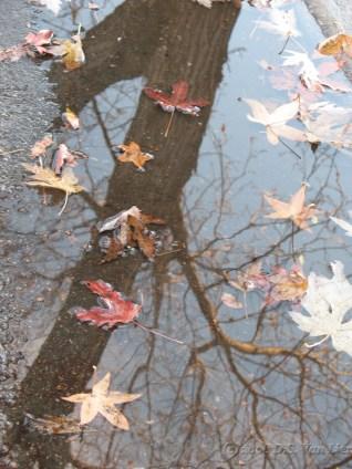 Random puddle (3)