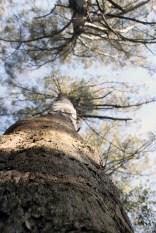 Tree.72dpi
