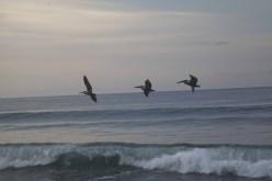 Playa Hermosa Dawn070114_6