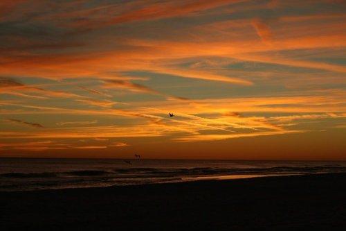 sunset-birds-flying